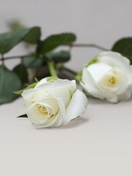 Doves: Single White Rose Stem